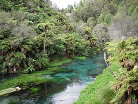 [Image: Waihou-river-450x337.jpg]