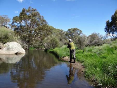 Stream near Canberra